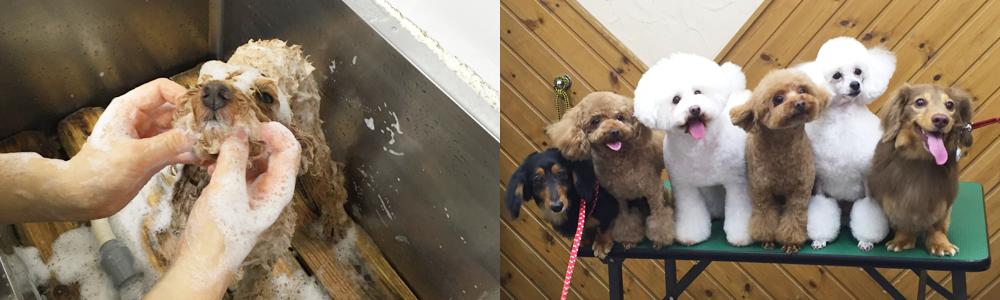 施術の様子と並んだ犬